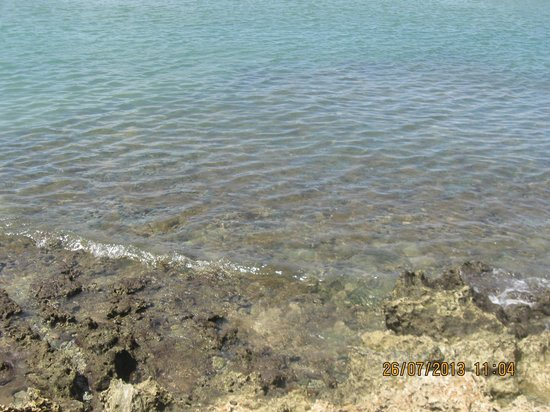 Reef View Apartments: A view of the Buccoo Bay - clear water and coral