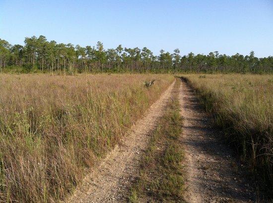 Long Pine Key: The trail in sawgrass prairie