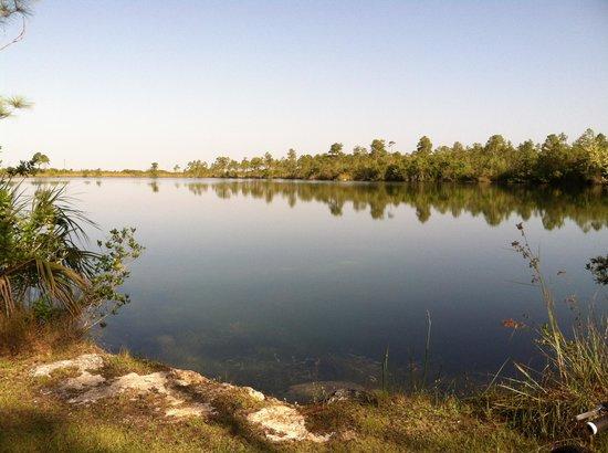 Long Pine Key: Pond on the far end