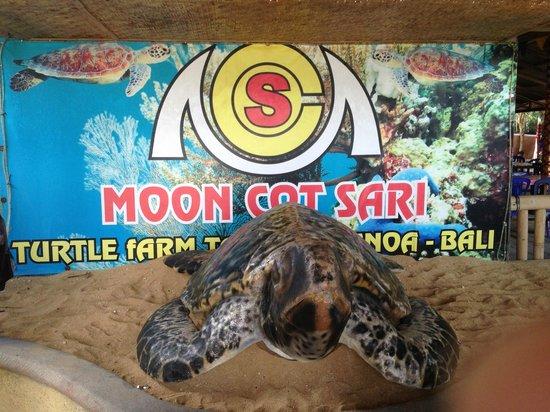 Glass Bottom Boat and Turtle Farm: Turtle Farm