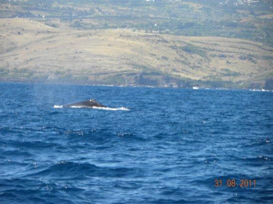 Le Grand Bleu : Baleine