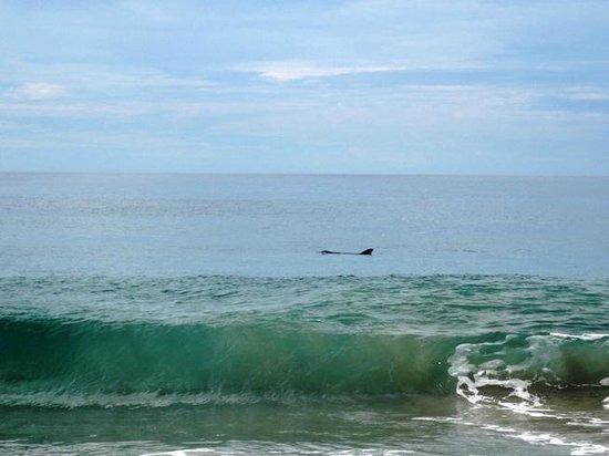 delfin frente a la posada zaira del mar