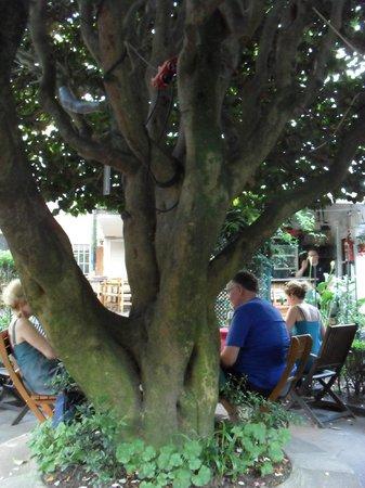 Casa Felisa : Dining in the lush secret garden