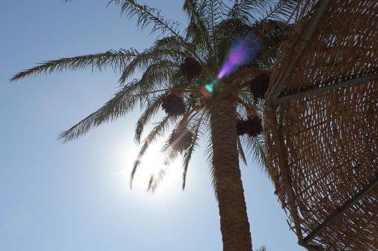 Marlin Inn Azur Resort : Солнышко