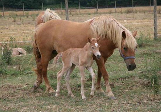 Agriturismo I Due Mondi: mamma con puledrino