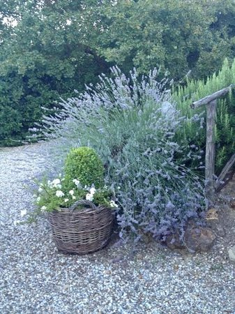 Agriturismo Il Vecchio Milipano : colori e profumi