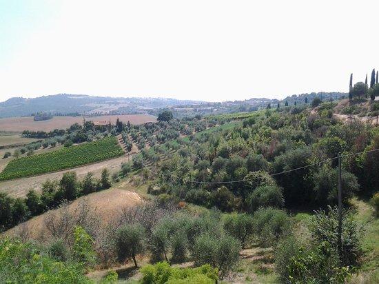Agriturismo La Buca: vista dalla finestra...