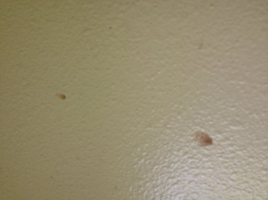 Americas Best Value Inn: Food, or something grosser, on the wall