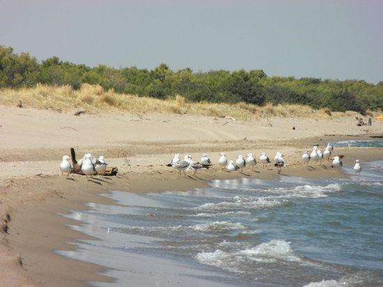Scanzano Jonico, Włochy: spiaggia di Terzo cavone