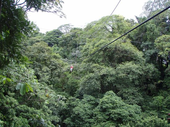 Tours to Go Costa Rica: Surrounded by green!