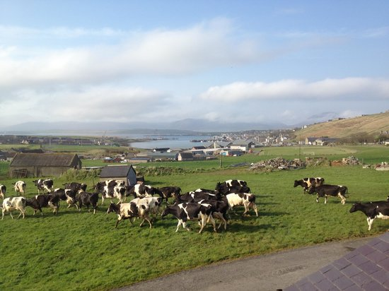 Burnside Farm : View from Scapa View