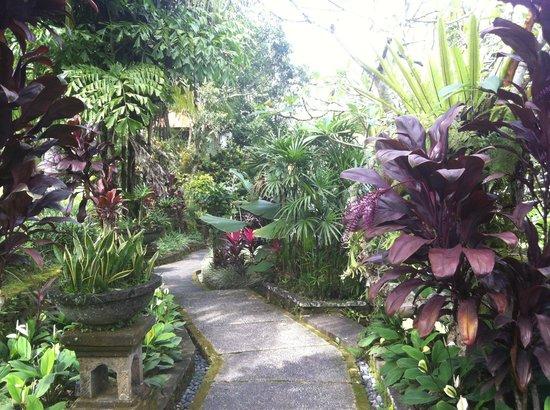 Bucu View Bungalows : jardin