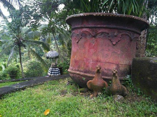 Bucu View Resort: autour de la piscine