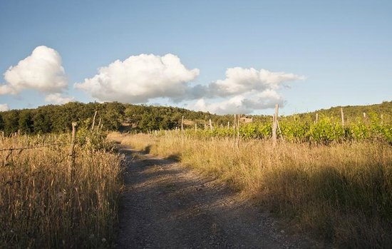 Agriturismo Podere Tegline: Anfahrt zwischen Weinreben
