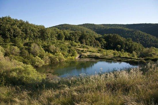 Agriturismo Podere Tegline: Blick auf den Teich