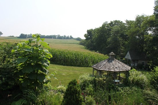 Eby Farm Bed & Breakfast: Overlooking the corn field on the back deck.