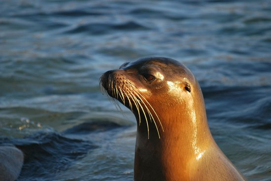 Galapagos Unbound - ROW Day Tours and Adventures: Sea Lion Pup