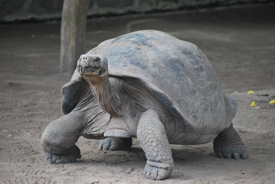 Row Adventures: Galapagos Tortoise