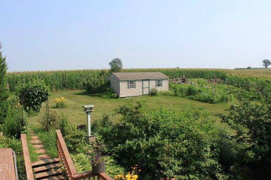 Eby Farm Bed & Breakfast: Back yard