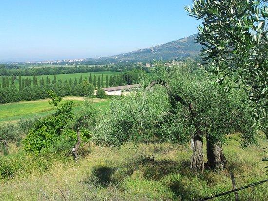 Villa di Piazzano: Hotel's surrounding view