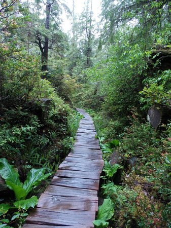 wooden walkway through the rainforest awesome picture of ozette