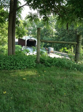 Eby Farm Bed & Breakfast: View from their lawn
