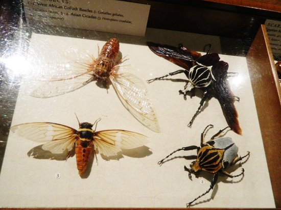 The Walters Art Museum : An impressive insect collection