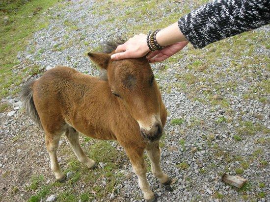 imecofarm: My sister petting a foal