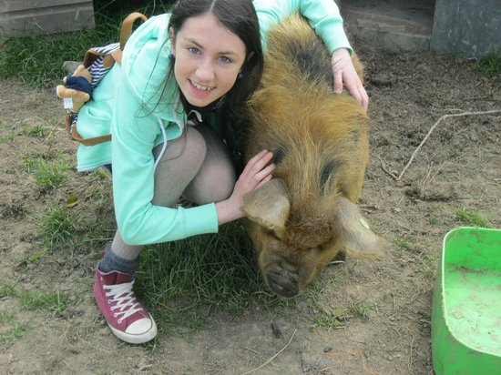 imecofarm: My sister playing with the pigs
