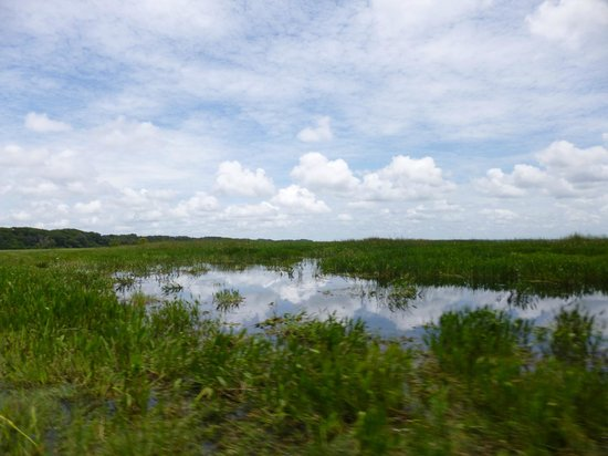 Wild Willy's Airboat Tours: The lake