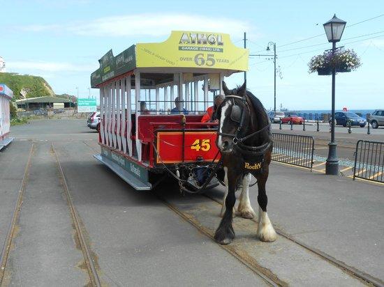 Douglas Bay Horse Tramway: gee up horsey