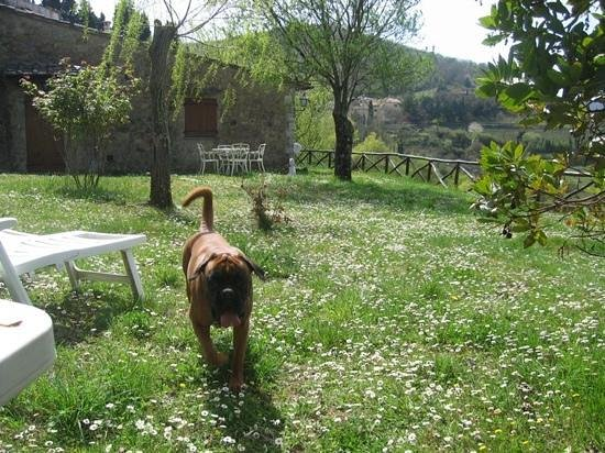 Baldini Romanita: dogs are welcome