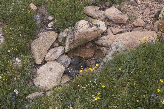 Tundra Communities Trail: Tiny alpine flowers