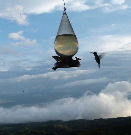 Poas Lodge and Restaurant: Hummingbirds galore
