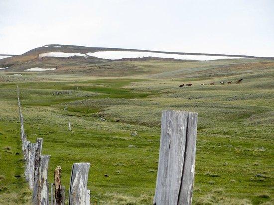 Safari Experience - Patagonia Profunda: The Patagonian steppe