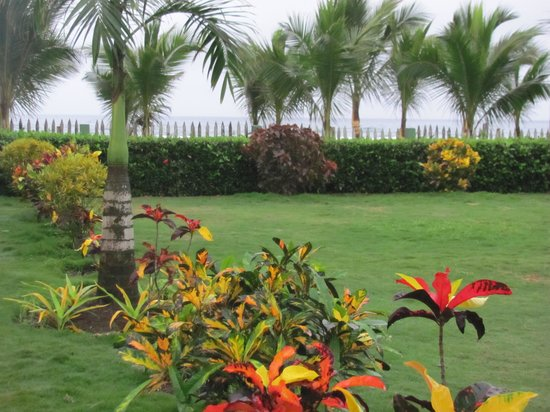 Hostal Kundalini: jardín