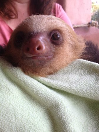 Toucan Rescue Ranch: Natalie, the baby sloth