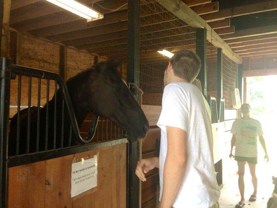 SoCo Farm and Food : Meeting the horses