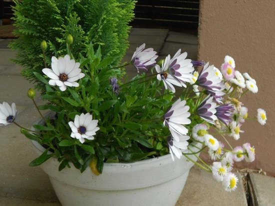 Berghotel Kockelsberg: Flowers at outside sitting area
