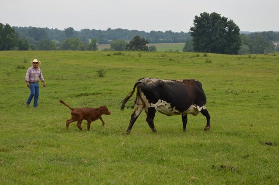 Seventy-four Ranch's newest calf