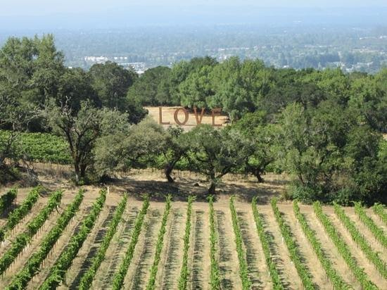 Paradise Ridge Winery: View from the top