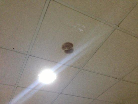 Hotel America Inc.: Plafond
