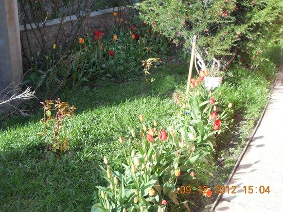 Hospedaje Flores del Sur: jardin