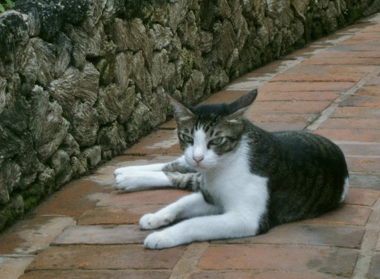 Kuta i Bali bladet cats