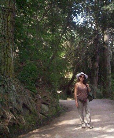 Río Subterráneo de la Cumbrecita: Camino al arroyo por el bosque