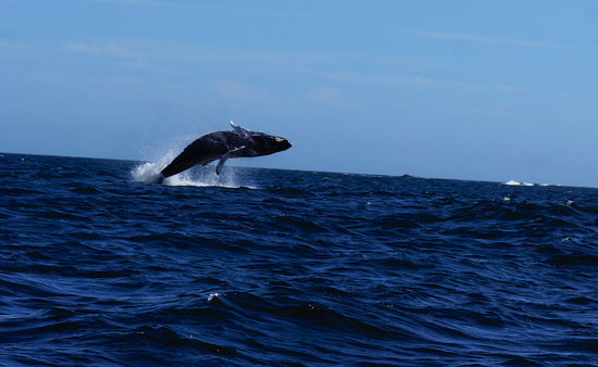 Eagle Nook Resort: Holy Humpback!