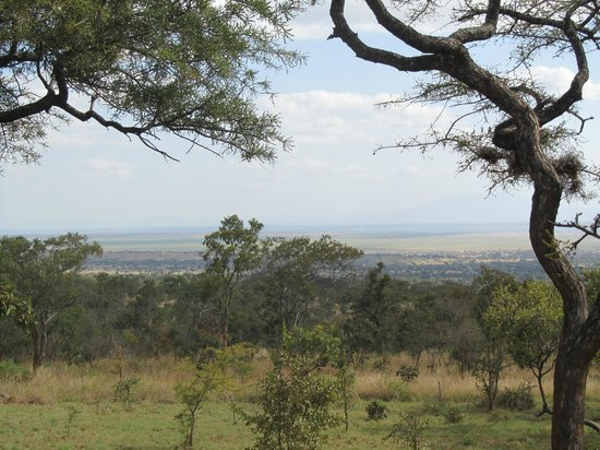 Kikoti Safari Camp : View from the porch of the room.