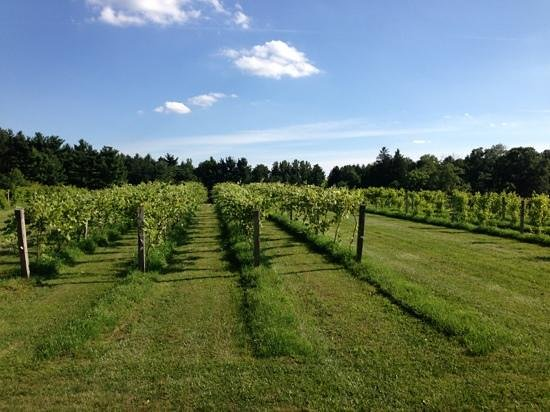 Sarah's Vineyard: gorgeous