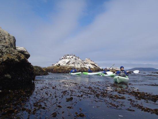 Avila Beach Paddlesports : Paddling past one of the islands