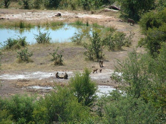Victoria Falls Safari Lodge: View of waterhole from balcony